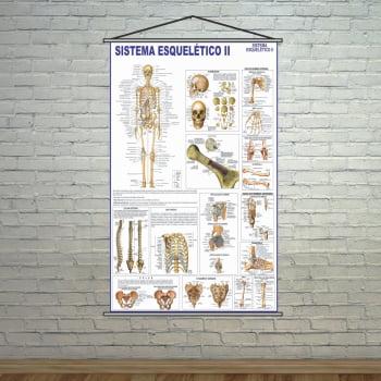 Banner Escolar Pedagógico Sistema Esquelético ll